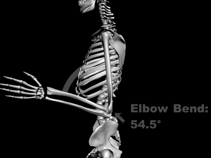 Medical forensic animation sample - a human skeletal view, displaying angle of elbow.